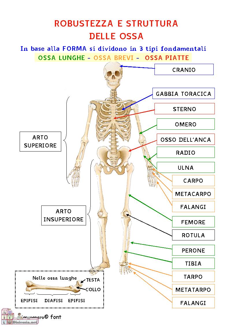Molto corpo umano | PAIDEIA 2.0 - Officina per la Didattica INCLUSIVA GJ13